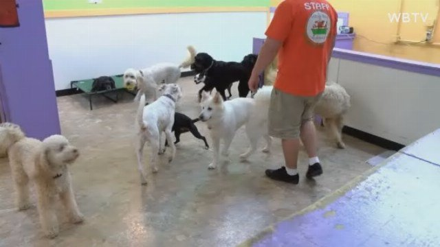 Small Dog In Michiana