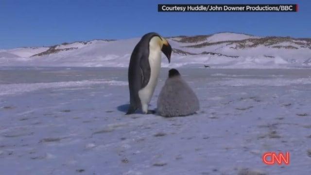 meet our researchers in antarctica